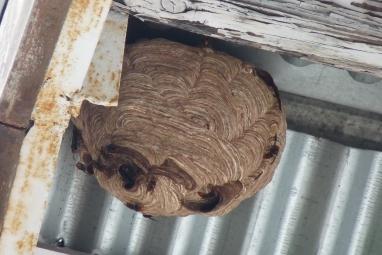 #Wasp-hive