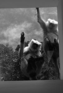 [Unacceptable monkey-behaviour, according to Chingoo]