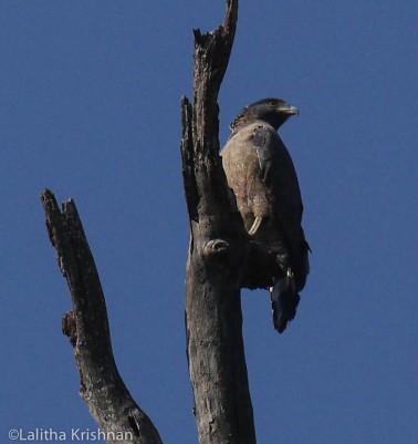 Eagle enroute