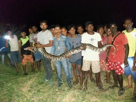 python wcwa