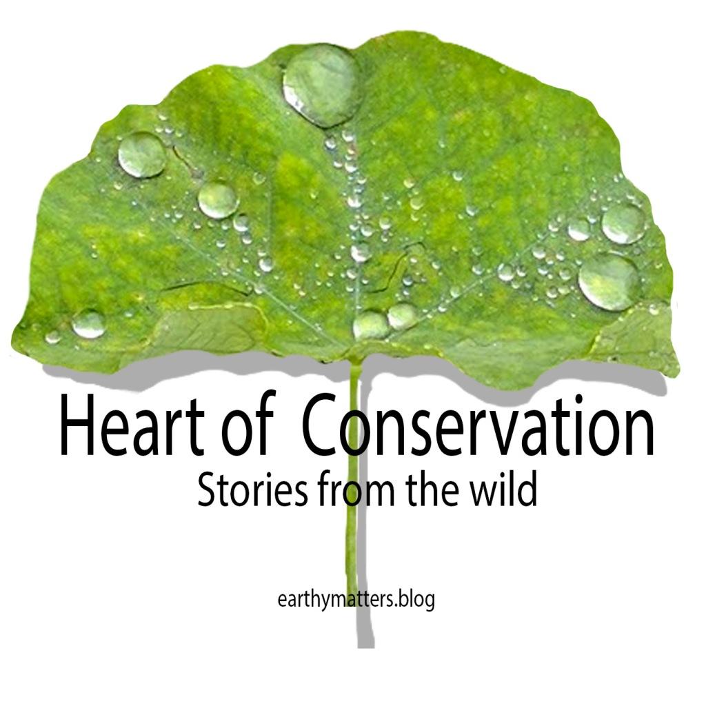 #HeartofConservationPodcast logo #storiesfromthewild
