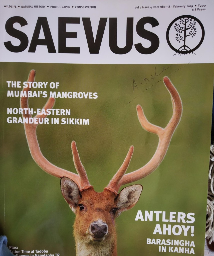 Article: Birdlife secrets exposed in Saevus -photography and conservation mag