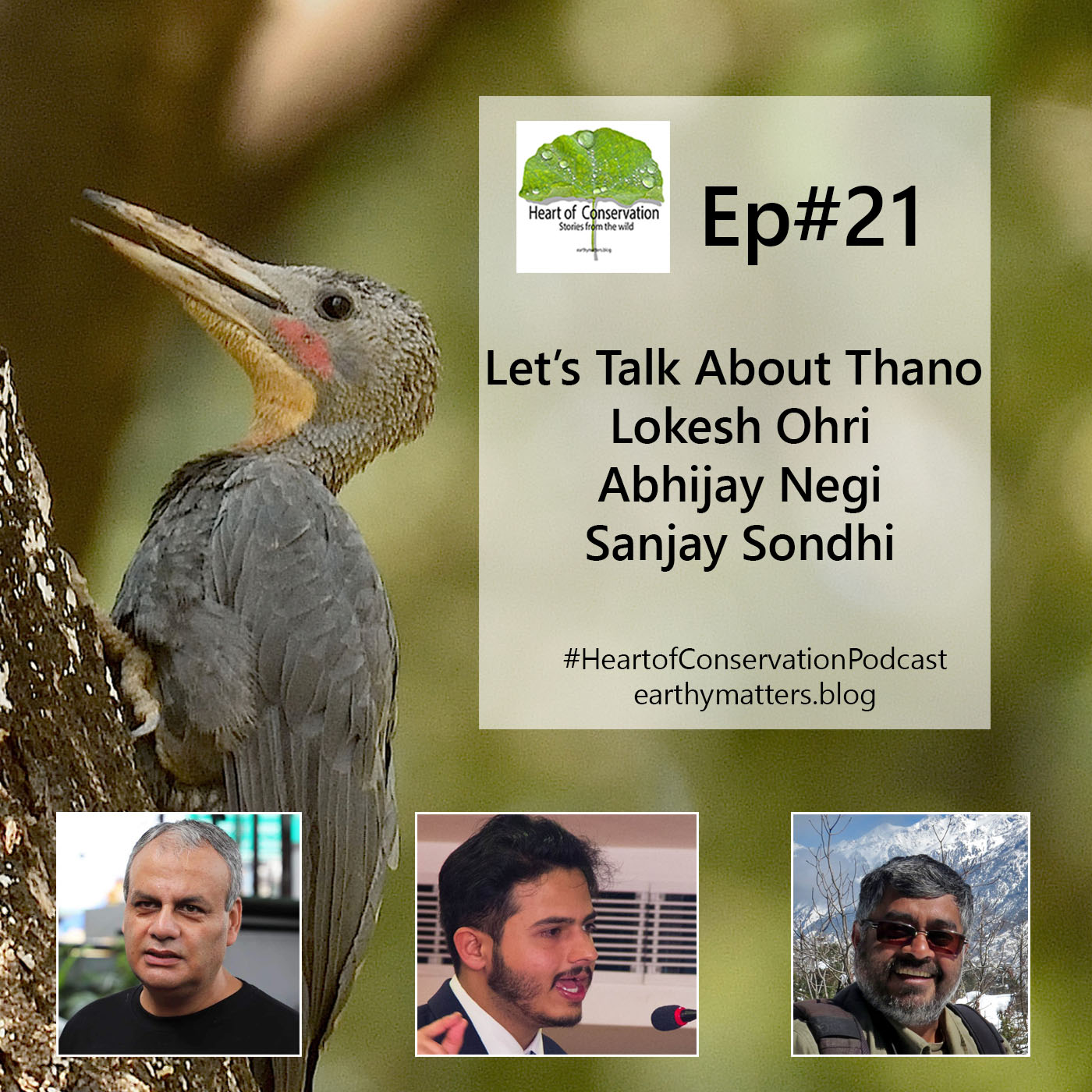 Let's Talk About Saving Thano Forest and the Biodiversity Under its Canopy.